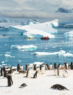 Last Minute... Best of Antarctica!